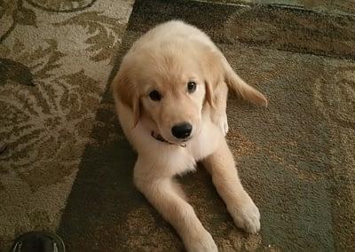 Shelby at 10 weeks old (Luna)