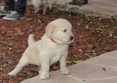 Puppy from Molly