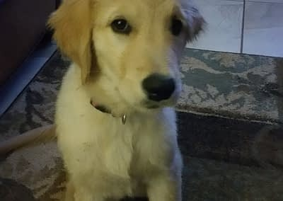 Shelby at 14 weeks (Luna)