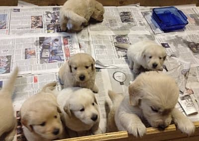 Pups from Echo