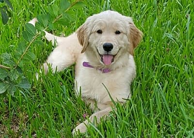 Puppy from Bailey