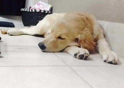 Cooper's Past Puppy