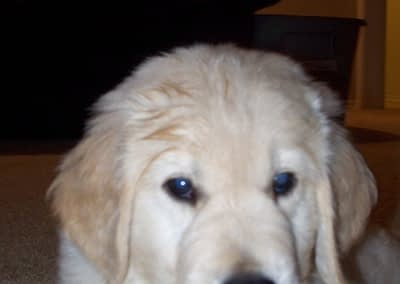 Cooper as a Puppy